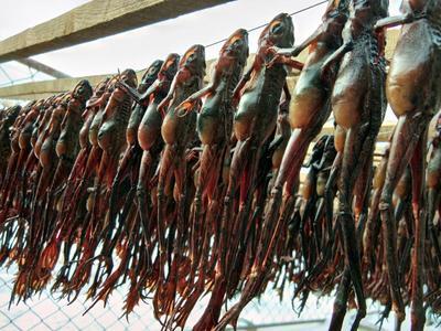 吉林吉林舒兰市林蛙油