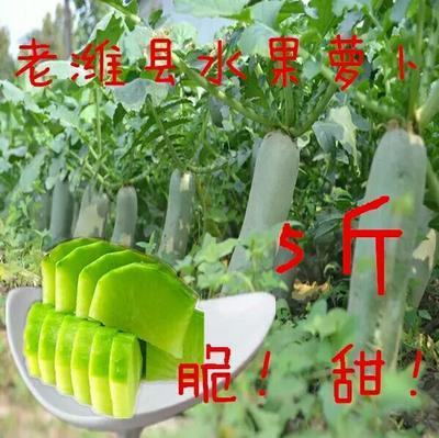 山东潍坊潍县青萝卜 1.5~2斤
