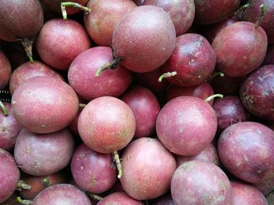 这是一张关于紫红色百香果 60 - 70克 超大果和苹果比拼的产品图片