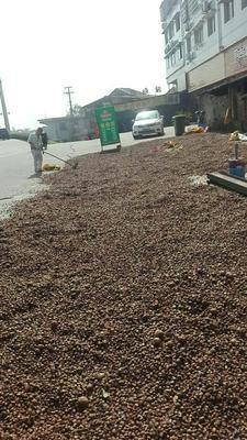 湖南株洲油茶籽
