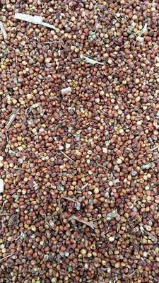 湖南常德红缨子高粱 霉变 ≤1% 1等品