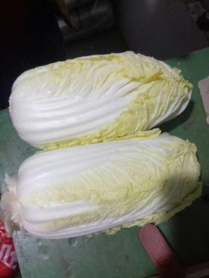 河南省安阳市内黄县高山娃娃菜 7~10两