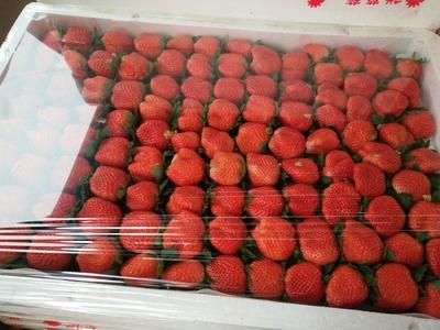 河南郑州美国甜查理草莓 20克以上