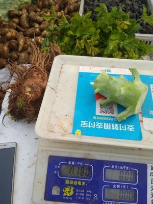 陕西省西安市高陵县西兰花根 0.5~0.8斤 10cm以下