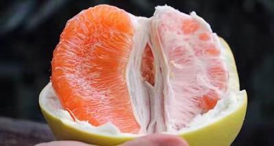 四川眉山黄金柚 2.5斤以上