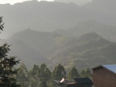 广西桂林松木 松原木