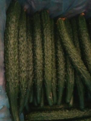 辽宁朝阳水黄瓜 22~25cm 鲜花带刺