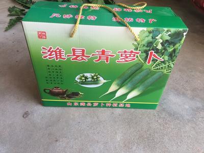 山东省潍坊市寒亭区潍县青萝卜 1~1.5斤