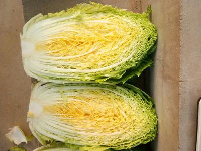湖北省天门市天门市韩国黄心白菜 3~6斤 净菜