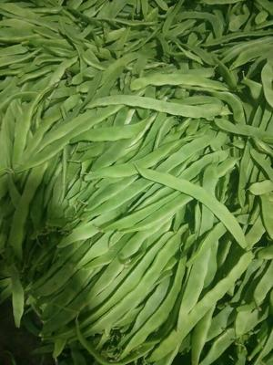 云南保山绿扁豆 10cm以上 2cm以上