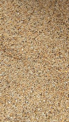 河南周口瘪小麦