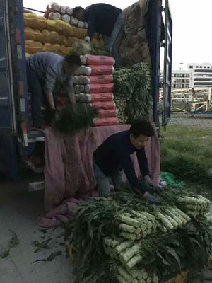 浙江省杭州市余杭区新绿储三号白菜 3~6斤 毛菜
