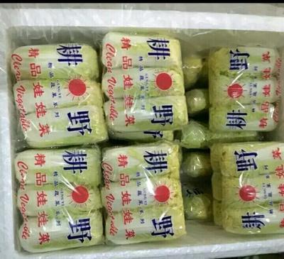 湖北省荆州市荆州区高山娃娃菜 10两以上