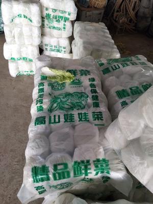 江苏省徐州市沛县冬强甘蓝 1.5~2.0斤