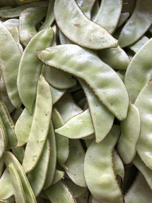 湖南岳阳白扁豆 1cm以上 10cm以下