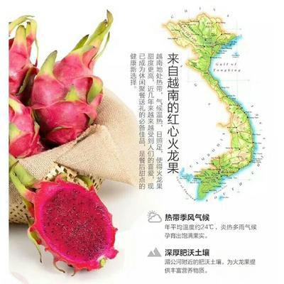 广西崇左越南红心火龙果 中(5-7两)