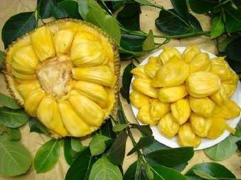 海南海口海南菠萝蜜 15斤以上