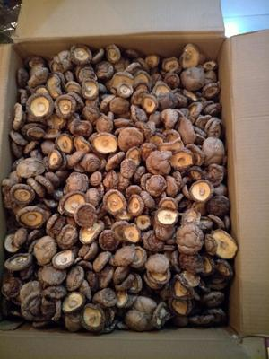 河南南阳剪柄香菇 箱装 1年以上