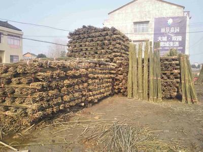 湖北襄樊菜架竹