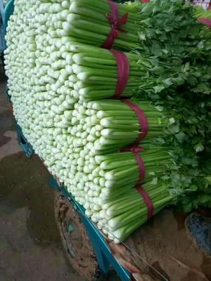 这是一张关于美国文图拉芹菜 45~50cm 0.5斤以下的产品图片