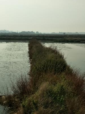 湖北荆州洪泽湖螃蟹 2.0两以下 公蟹