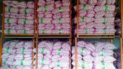 河南郑州中牟大蒜 5.5-6.0cm 多瓣蒜