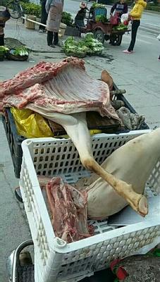 广西百色杂交山羊 30-50斤
