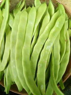 山东济南绿龙扁青芸豆