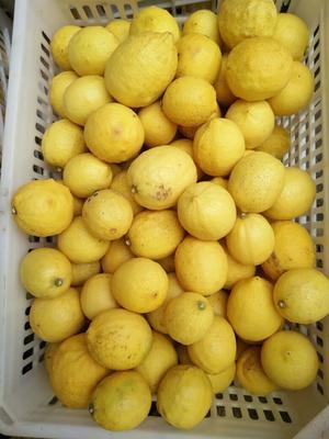 这是一张关于安岳柠檬 2.7 - 3.2两的产品图片