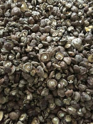 陕西汉中原木干香菇 散装 1年