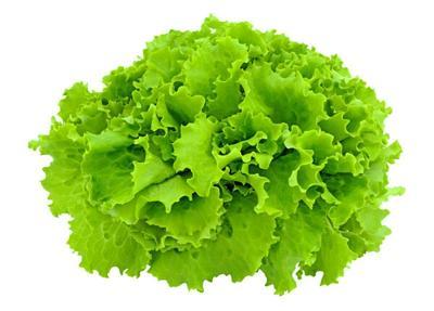 这是一张关于散叶生菜 7~8两的产品图片