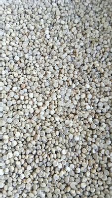 内蒙古乌兰察布黄藜麦