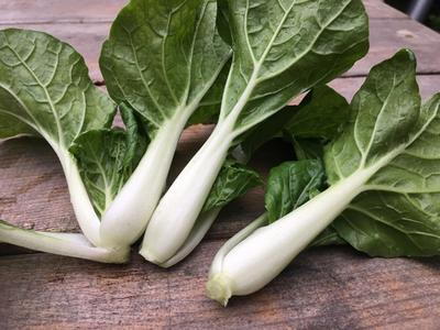 四川省成都市金牛区奶白菜 1斤以下 毛菜