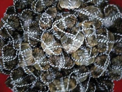 湖南岳阳洪湖螃蟹 1.0两 公蟹