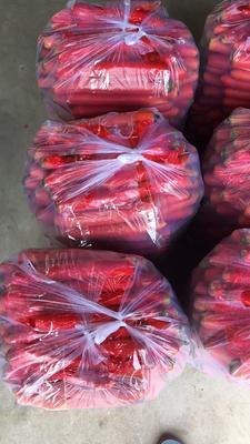 陕西省渭南市大荔县秤杆红萝卜 10~15cm 3两以上 3~4cm
