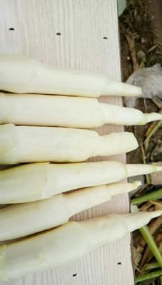 江西上饶茭白 15-20cm