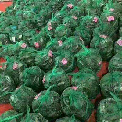 福建福州仓山区洪湖螃蟹 2.0-2.5两 母蟹
