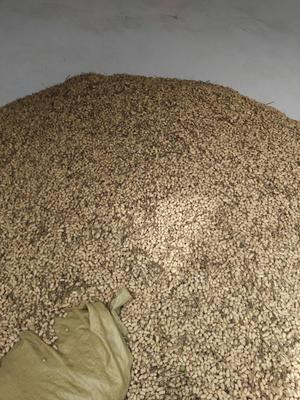 这是一张关于带壳花生 干货 带壳花生的产品图片