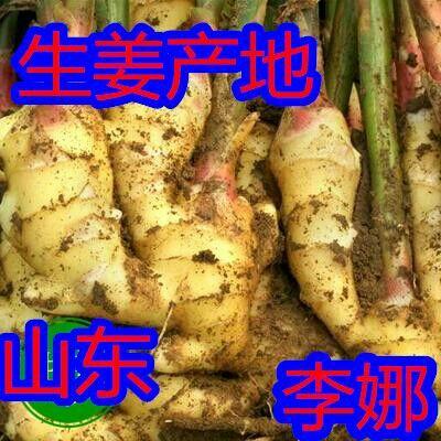这是一张关于昌乐大姜 水洗 5两以上的产品图片