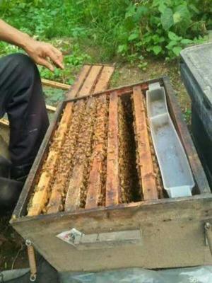 这是一张关于土蜂蜜 散装 95%以上 2年以上的产品图片