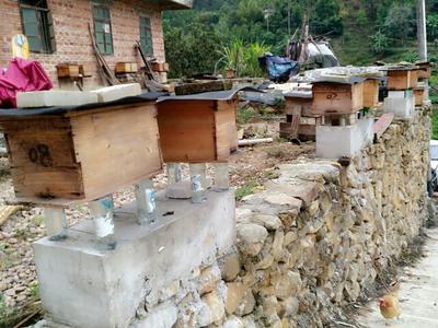 这是一张关于野生蜂蜜 塑料瓶装 100% 2年以上的产品图片
