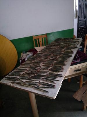 湖北襄樊老河口市野生蜈蚣