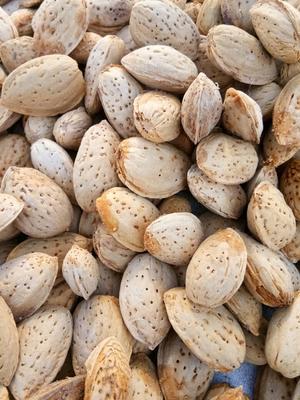 新疆喀什巴旦木 1年以上 带壳