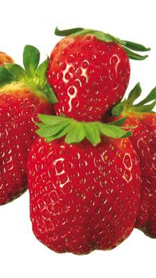 内蒙古自治区鄂尔多斯市准格尔旗红颜草莓 20克以上