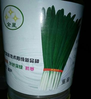 河北沧州肃宁县韭菜种子