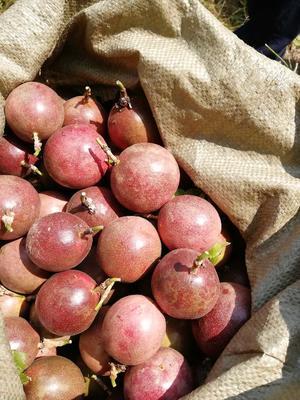 这是一张关于紫色百香果 60 - 70克的产品图片