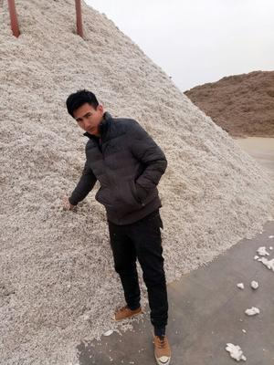 新疆维吾尔自治区伊犁哈萨克自治州特克斯县棉籽壳