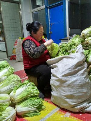 黑龙江省齐齐哈尔市梅里斯达斡尔族区新绿储三号白菜 6~10斤 二毛菜