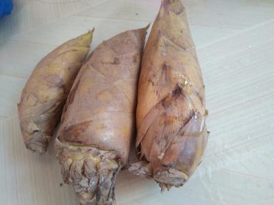 这是一张关于冬笋 9~13cm 鲜笋的产品图片