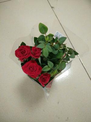 广东广州钻石玫瑰